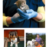 may 2016 free chiropractic consultation for humane society donation